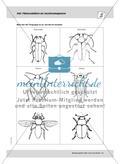 Mai: Pflanzenblüten als Insektenmagneten / Neuer Wohnraum für Insekten Preview 4