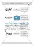 September: Die Kastanienminiermotte / Pflanzengallen Preview 5
