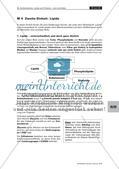 Lerntheke: Kohlenhydrate, Lipide und Proteine Preview 11