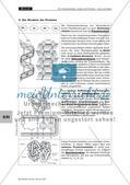 Lerntheke: Kohlenhydrate, Lipide und Proteine Preview 20