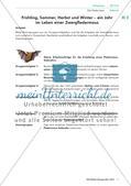 Das Leben einer Fledermaus in den unterschiedlichen Jahreszeiten Preview 3