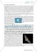 Das Leben einer Fledermaus in den unterschiedlichen Jahreszeiten Preview 9