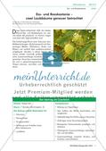 Biologie_neu, Sekundarstufe I, Pflanzen, Samenpflanzen, Bedeutung der Samenpflanzen für den Menschen und die Natur, Fortpflanzung, Blüte, Kastanie, Baum, Rinde, Samen