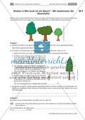 Eine Stationenarbeit zu Bäumen Preview 12