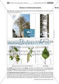 Eine Stationenarbeit zu Bäumen Preview 20