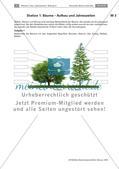 Eine Stationenarbeit zu Bäumen Preview 4