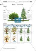 Eine Stationenarbeit zu Bäumen Preview 7