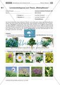 Nachtest Lernstandsdiagnose, Lexikon Blütenpflanzen Preview 1