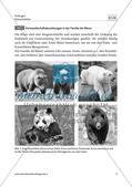Bären sind nicht gleich Bären  - M1-M4 Preview 1