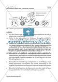 Der Nobelpreis für Medizin 2009 - M1-M3 Preview 5