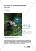 Die Vererbung der Blütenfarbe bei der Platterbse Preview 1