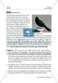 Drohendes Vogelsterben in Deutschland durch das Usutu-Virus - M1-M4 Preview 1