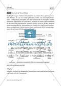 Drohendes Vogelsterben in Deutschland durch das Usutu-Virus - M1-M4 Preview 4