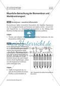 Räumliche Betrachtung der Biomembran und Membrantransport Preview 2