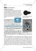 Von der Raupe zum Schmetterling - M1-M5 Preview 3
