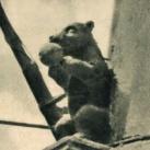 Medve-szobor