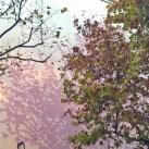 L'ombre de l'arbre II