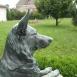 Cézár kutya
