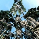 Kálvária kilátó - Szőlő-szobor