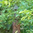 Fából faragott szoborpark