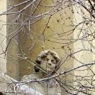 Thököly úti márványmenyasszony szobra