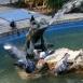 Teknősbékás szökőkút