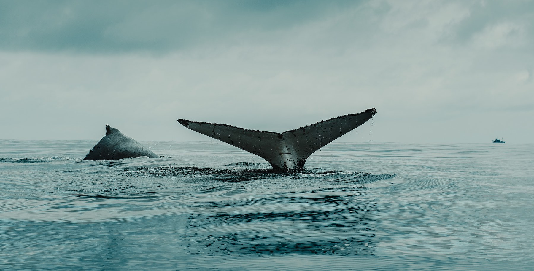 Whale by Flavio Gasperini