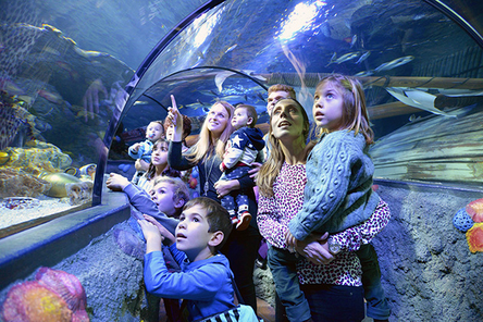 Garda SEA LIFE Aquarium