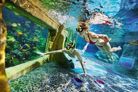 Subtropisch Zwemparadijs Nederland Kids Vakantiegids
