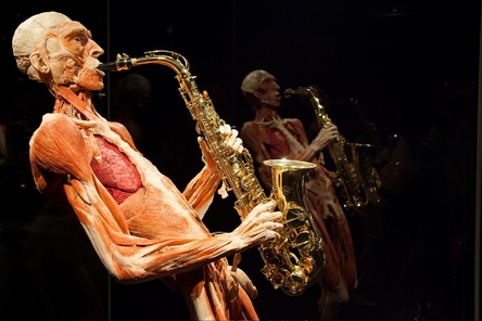 Biologie 2.0 bij BODY WORLDS