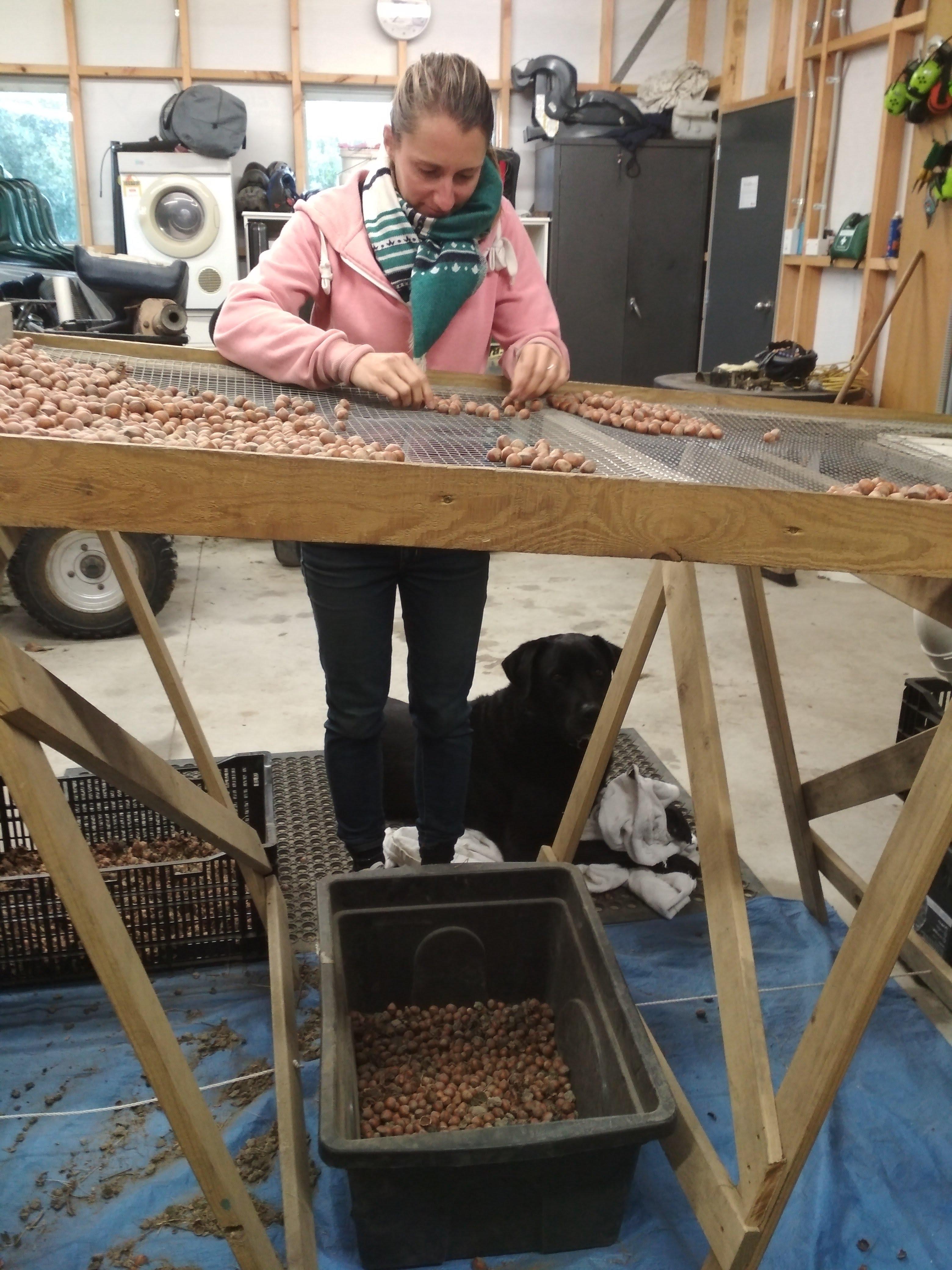 Sorting Hazelnuts