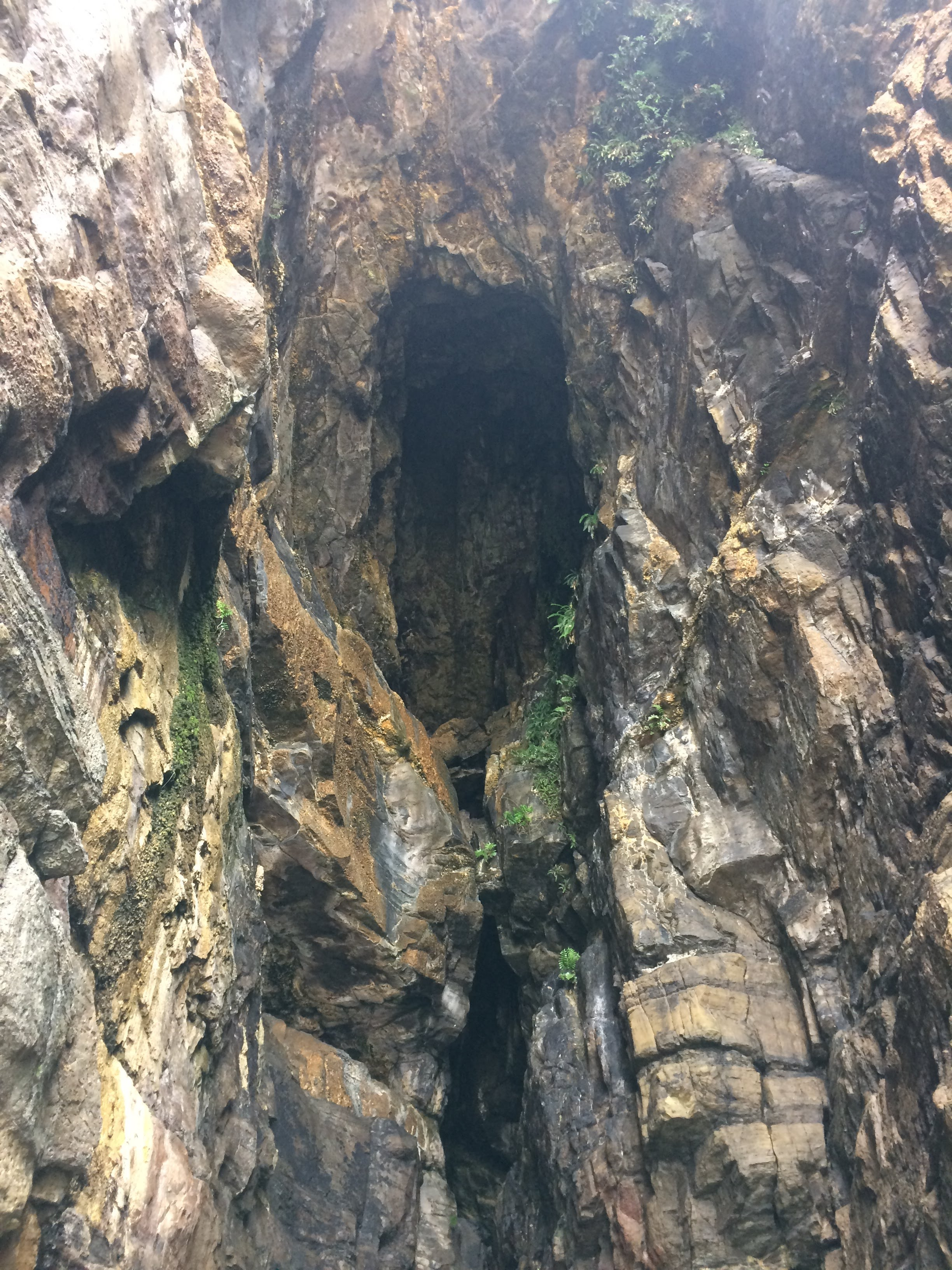 Catlins Cathedral Cave
