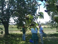 cherry farm inspection