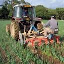 tractor weeding
