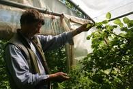 farmer with fruit tree