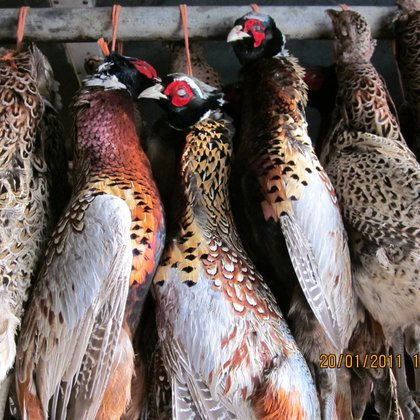pheasants hanging