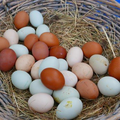 2015 March Moreton mushrooms Tillys Trad eggs MA