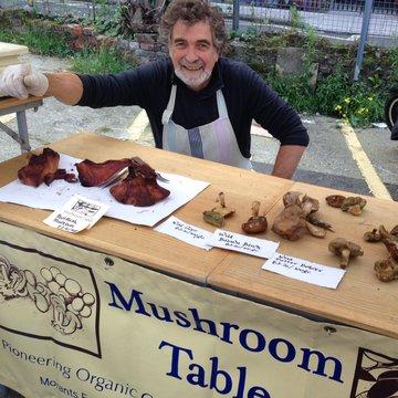 The Mushroom Table