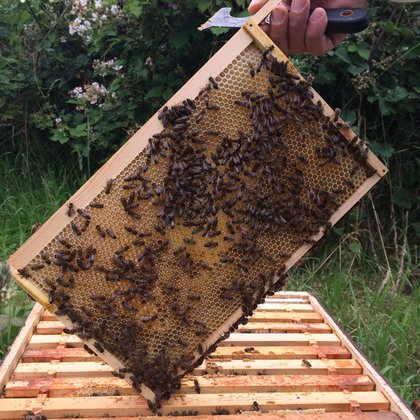 Busy Bee Suppliers cu frame with bees