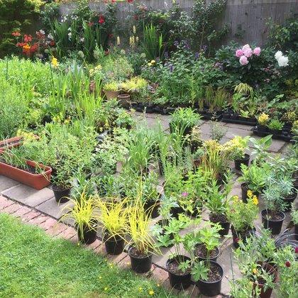 Chris's Plants