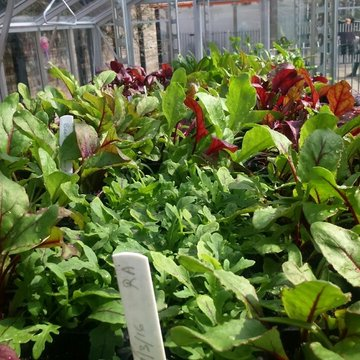 Cultivating KandC Nursery seedlings