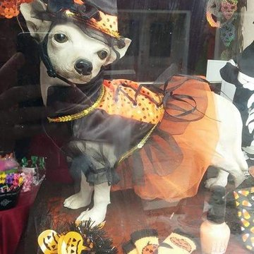 Halloween Dog dressed up