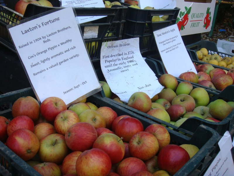 heritage apples Perry Court Farm