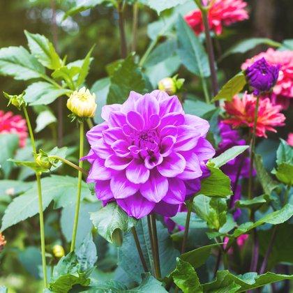 Flowers growing