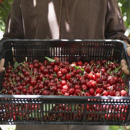 Cherries in basket