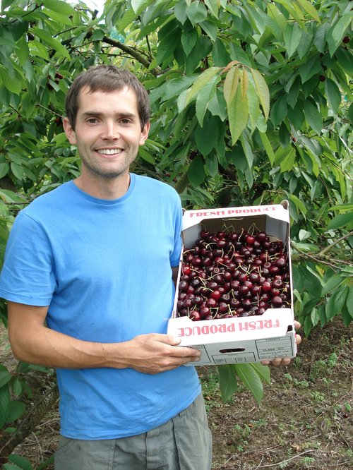 dallaways cherries