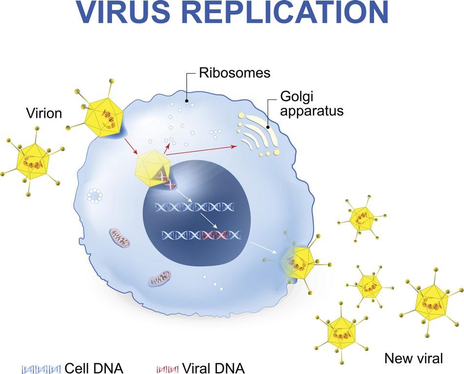 Учеными обнаружен врожденный белок, влияющий на репликацию ВИЧ - изображение 1