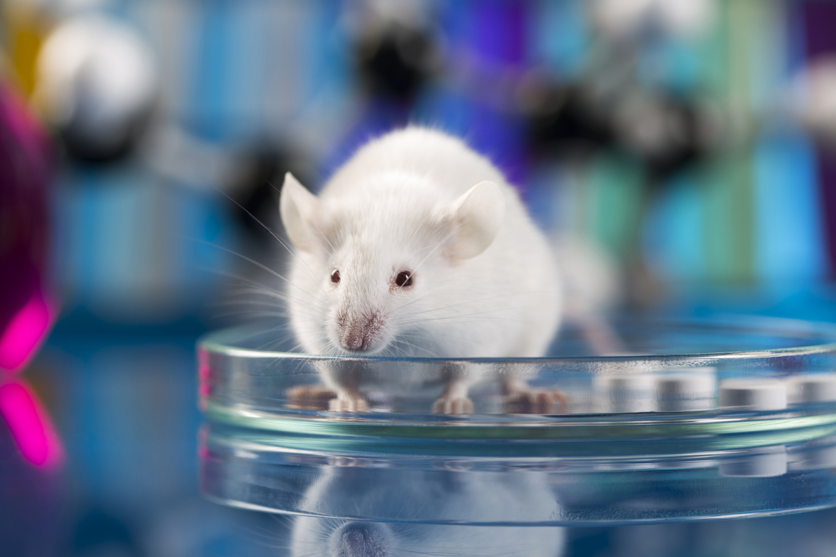 Great achievement in the fight against HIV: the virus was eliminated in mice DNA