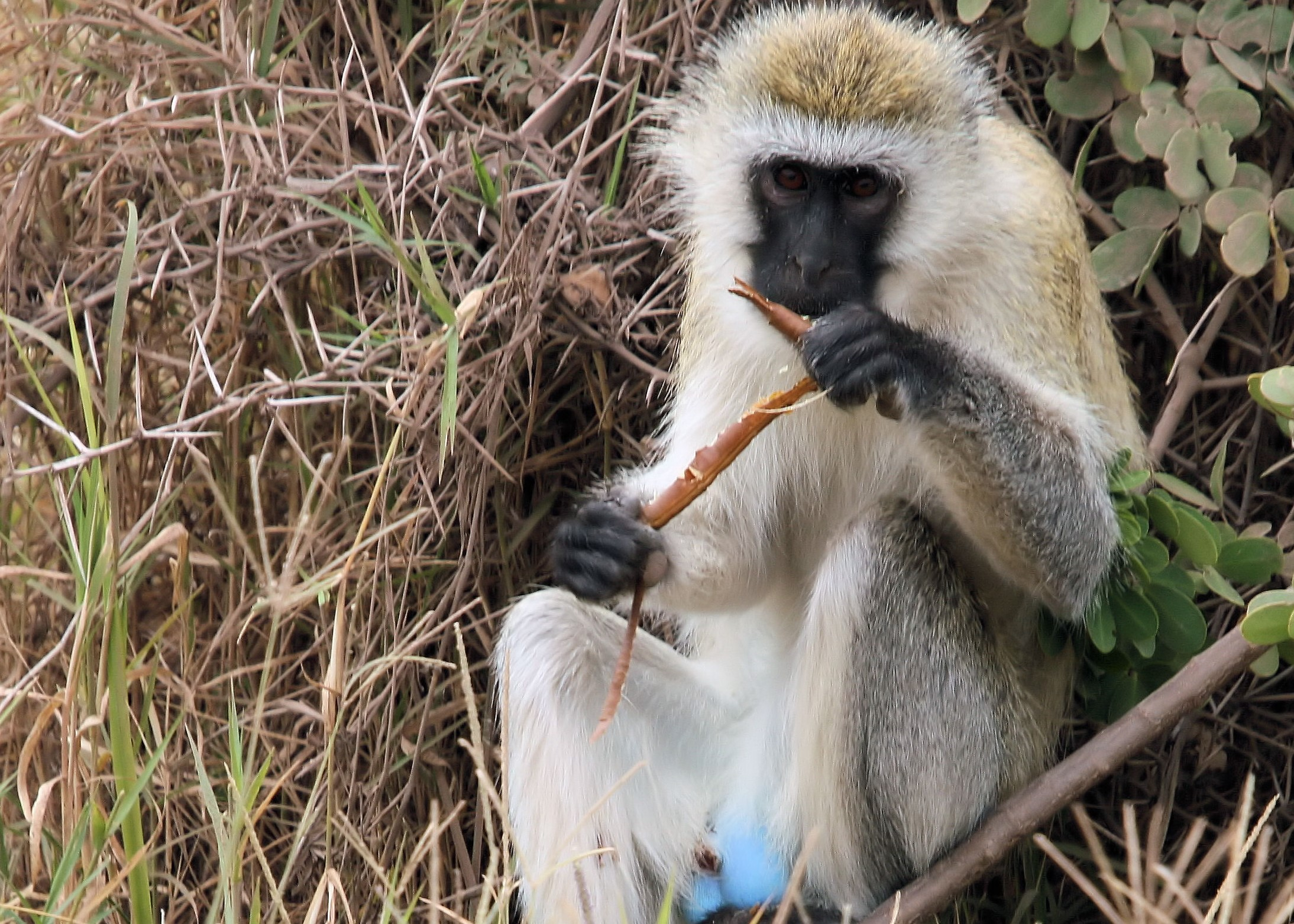 Gene discovery in monkeys could shed light on defense against HIV - picture 1