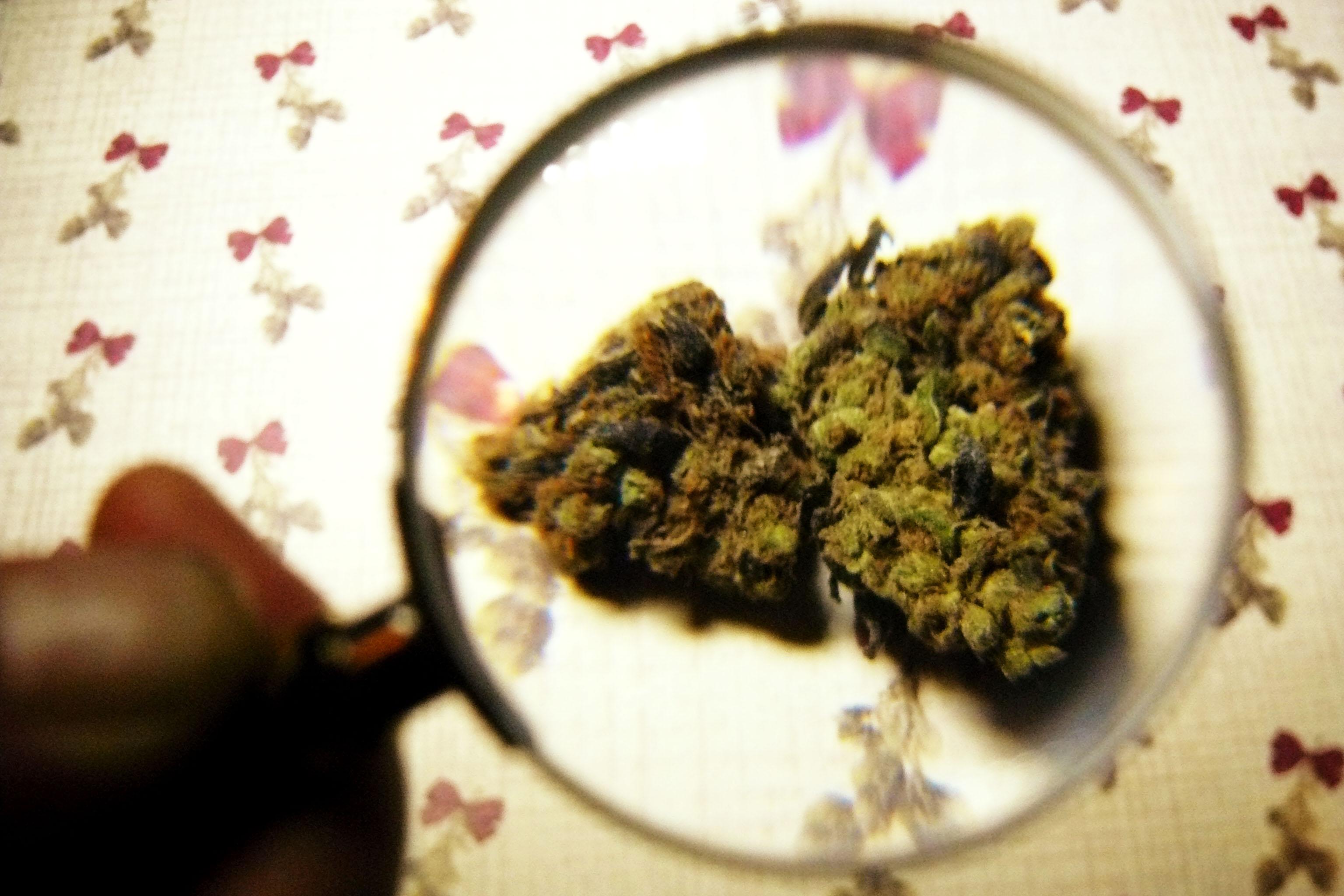 Marijuana may help HIV patients keep mental stamina longer
